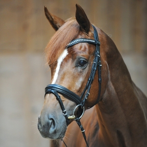 Camillo - Crank noseband with flash